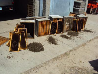 20121215192728-abejas-muertas.jpg